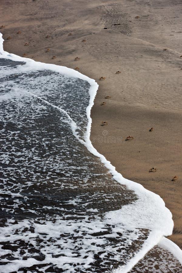 Крабы, который нужно идти на пляж Осмотрено от выше стоковые изображения