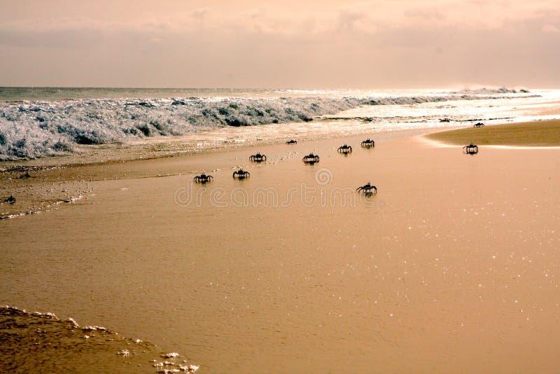 Моника сантьяго на пляже