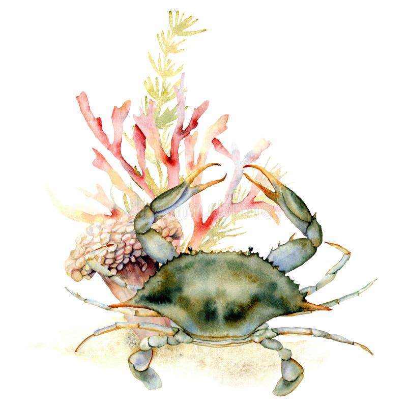 Краб акварели, коралл и состав морской водоросли Рука покрасила подводную иллюстрацию с ламинарией и коралловым рифом стоковые изображения