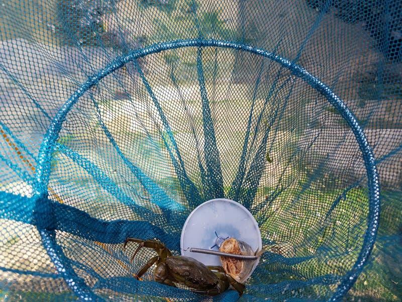 Краб в гнезде стоковая фотография