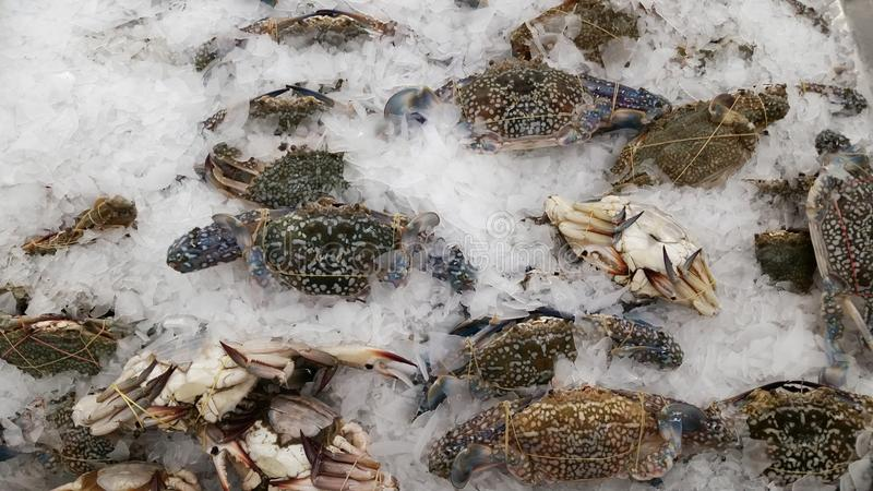 Краб морепродуктов океана стоковые изображения rf