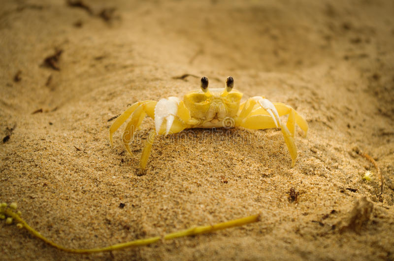 Краб на песке стоковая фотография