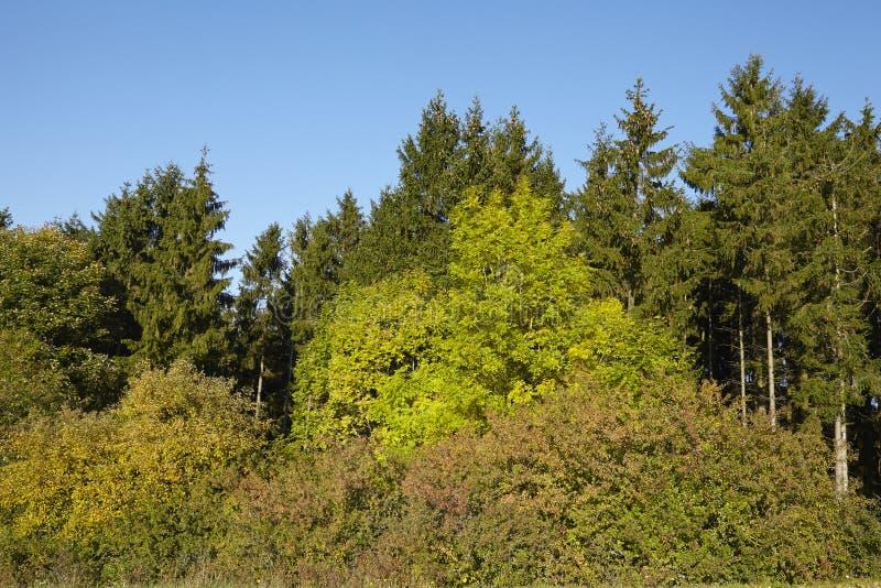 Край леса в падении стоковое изображение