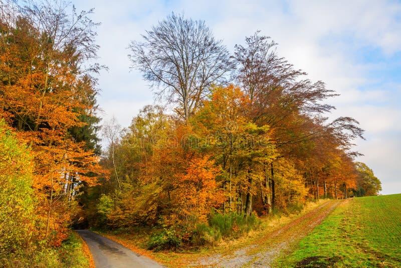 Край леса с деревьями покрашенными осенью стоковое фото