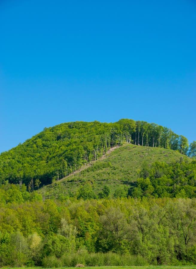 Край леса на холме стоковые изображения rf