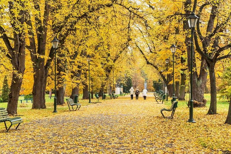 Краков, Польша - 25-ое октября 2015: Красивый переулок в осеннем парке стоковые изображения rf