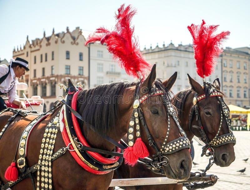 КРАКОВ, POLAND/EUROPE - 19-ОЕ СЕНТЯБРЯ: Украшенные лошади в Krako стоковая фотография rf