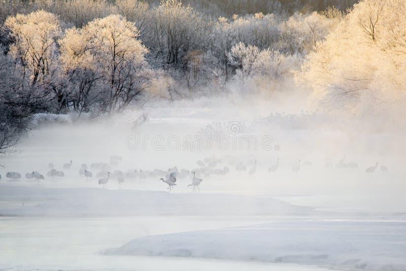 Краны в тумане: Прогулки крана и крыла щитков стоковое изображение rf