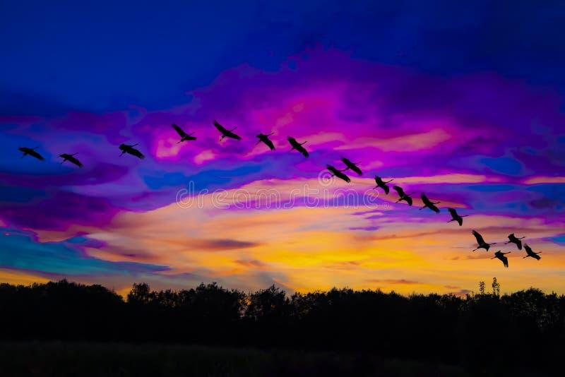 Краны летая в пышное небо вечера с фиолетовыми и оранжевыми облаками