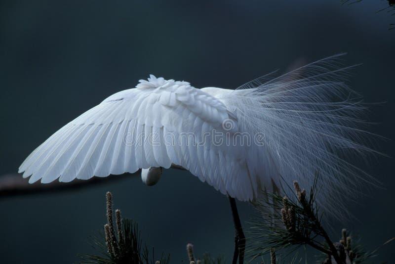 Download краны стоковое фото. изображение насчитывающей крыло, трава - 77342
