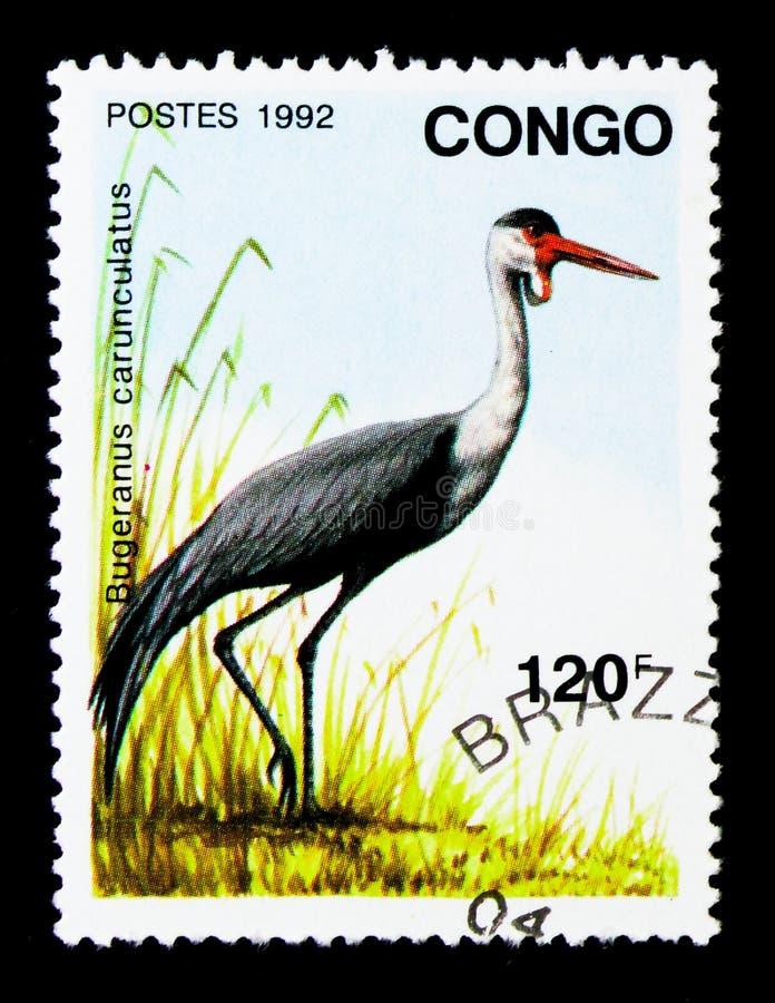Кран Wattled (carunculatus) Bugeranus, serie птиц, около 1992 стоковое фото rf