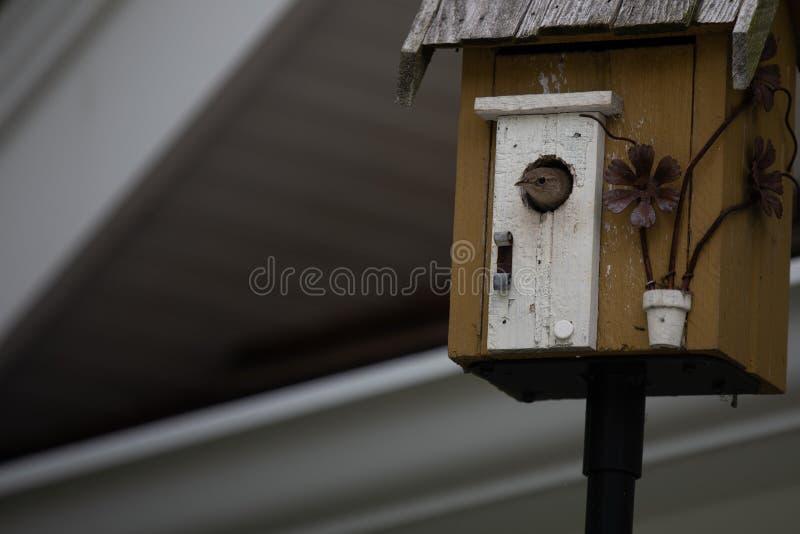 Крапивниковые дома в доме птицы стоковое фото