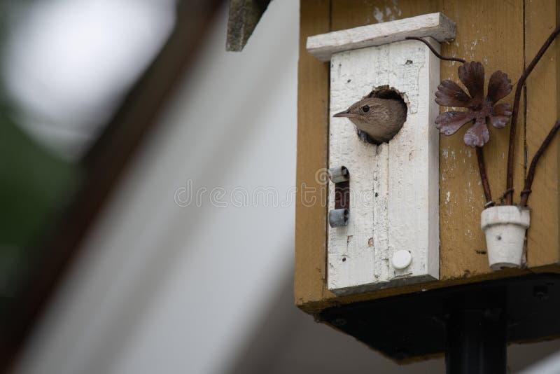 Крапивниковые дома в доме птицы стоковое изображение
