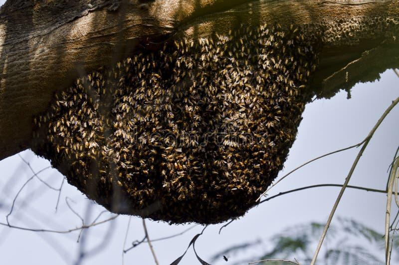 Крапивница пчелы в лесе стоковые изображения rf