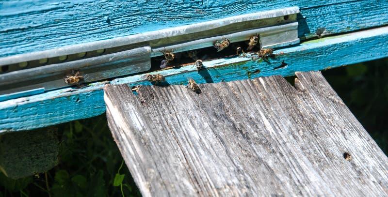 Крапивница пчелы с пчелами на ей стоковые изображения