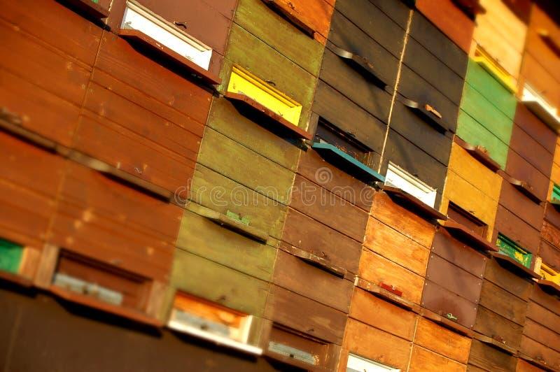 крапивница пчелы стоковое фото rf
