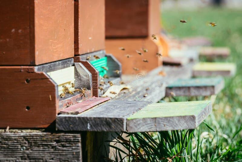 Крапивница пчел: Летание к приземляясь доскам стоковое изображение rf