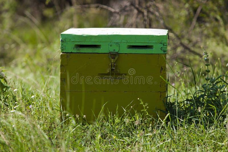 Крапивница пчел стоковая фотография rf