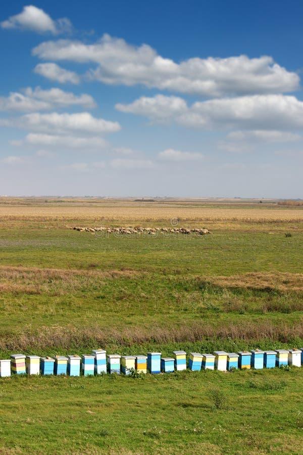 Крапивница пчелы на поле стоковая фотография rf