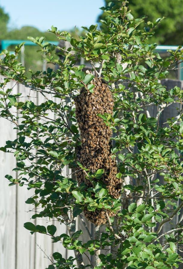 Крапивница пчелы стоковое изображение