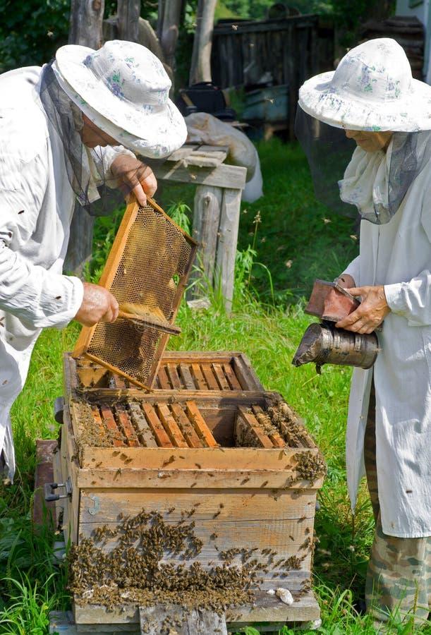 крапивница 6 beekeepers стоковое изображение