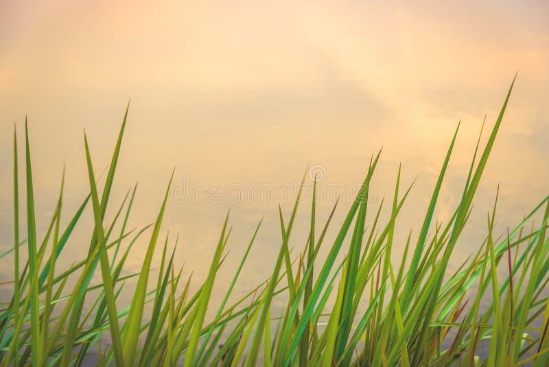 Красивая абстрактная зеленая трава стоковое изображение