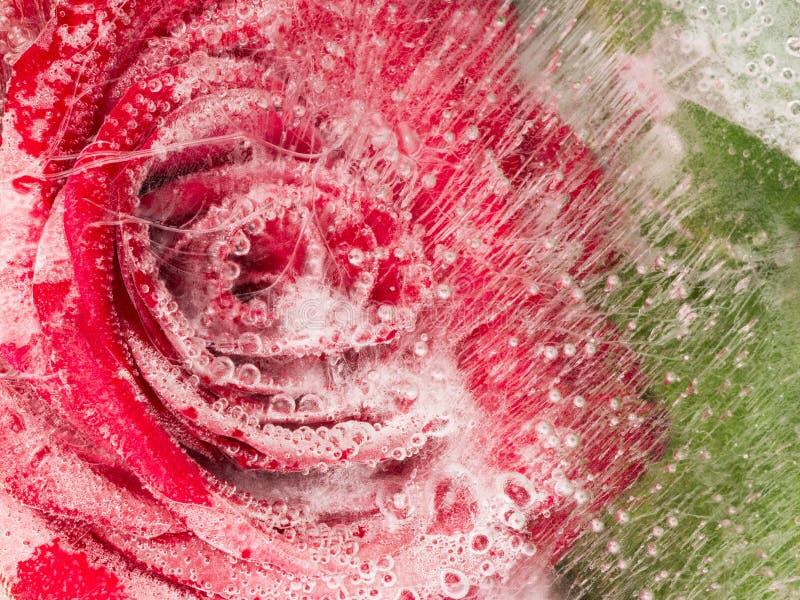 Красивая абстракция с красной розой стоковое изображение