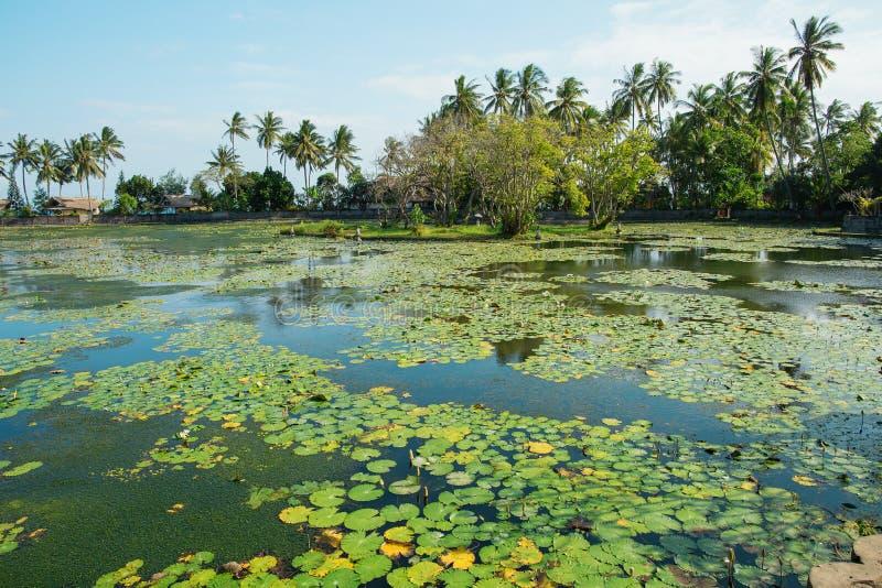 Красивая лагуна лотоса в Candidasa, Бали стоковые фото