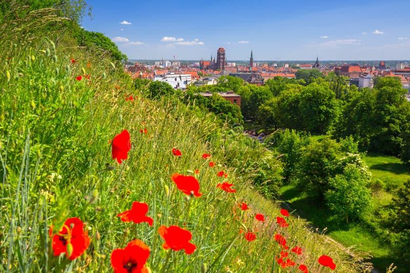 Красивая архитектура старого городка в Гданьск с красными цветками мака, Польше стоковое фото rf