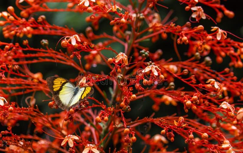 Красивая бабочка в природе стоковое изображение rf