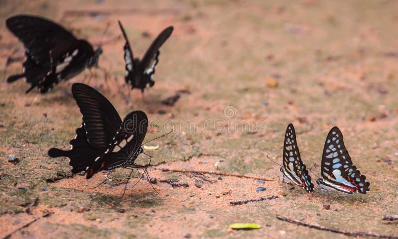 Красивая бабочка в природе стоковые изображения rf