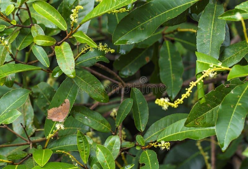 Красивая бабочка в природе стоковые фото