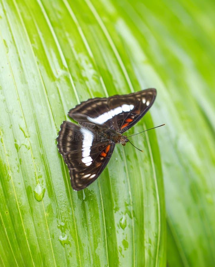 Красивая бабочка в природе стоковая фотография