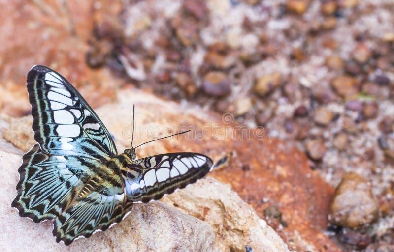 Красивая бабочка в природе стоковое фото rf