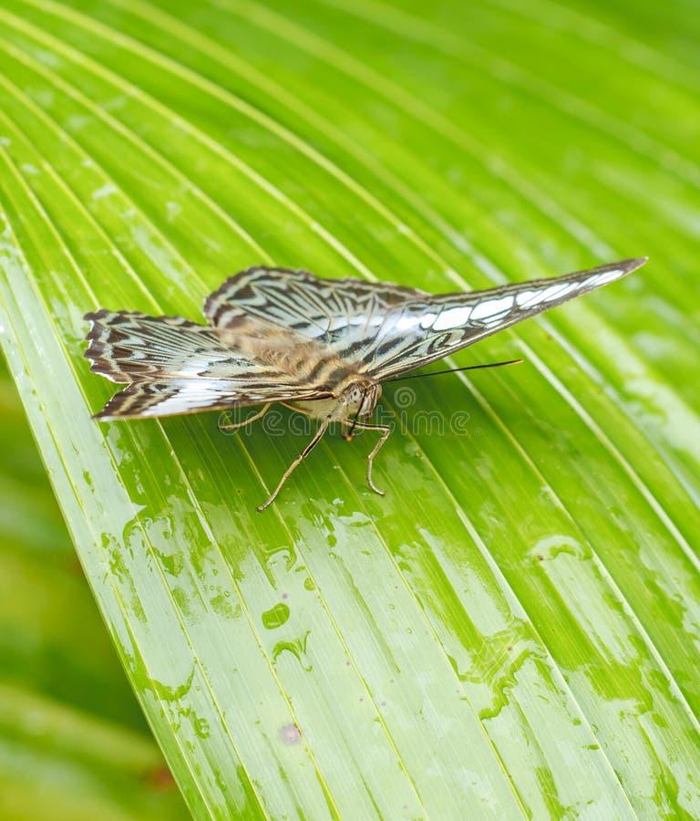Красивая бабочка в природе стоковая фотография rf