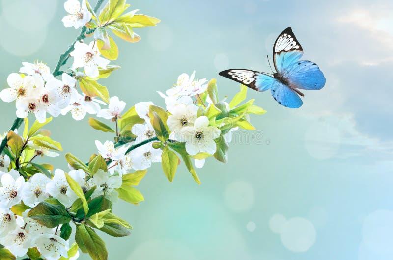 Красивая бабочка на белом цветке, предпосылке неба стоковые фото