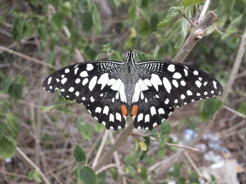 Красивая бабочка стоковое фото