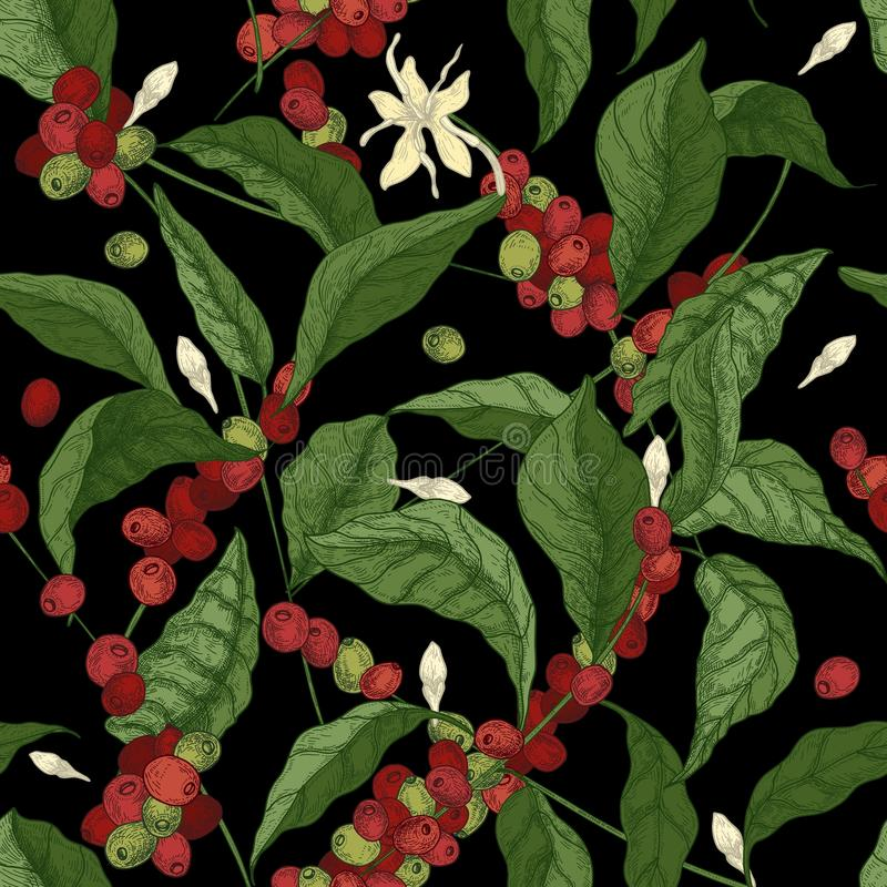 Красивая безшовная картина с ветвями дерева кофейного дерева или кофе, листьями, зацветающ цветет и приносить на черной предпосыл иллюстрация вектора