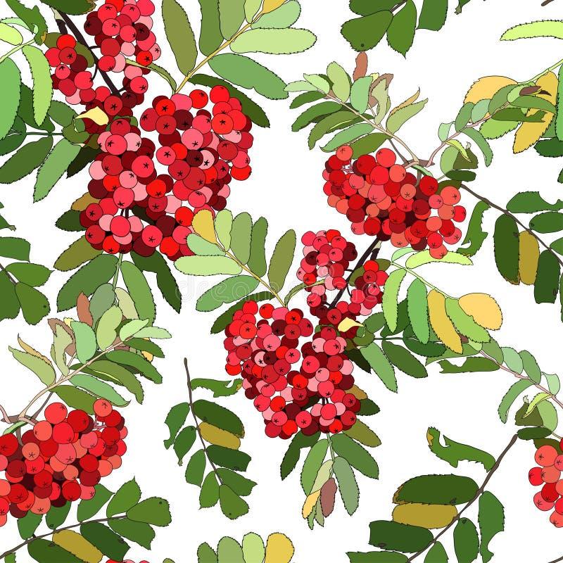 Красивая безшовная картина с ягодами рябины иллюстрация вектора