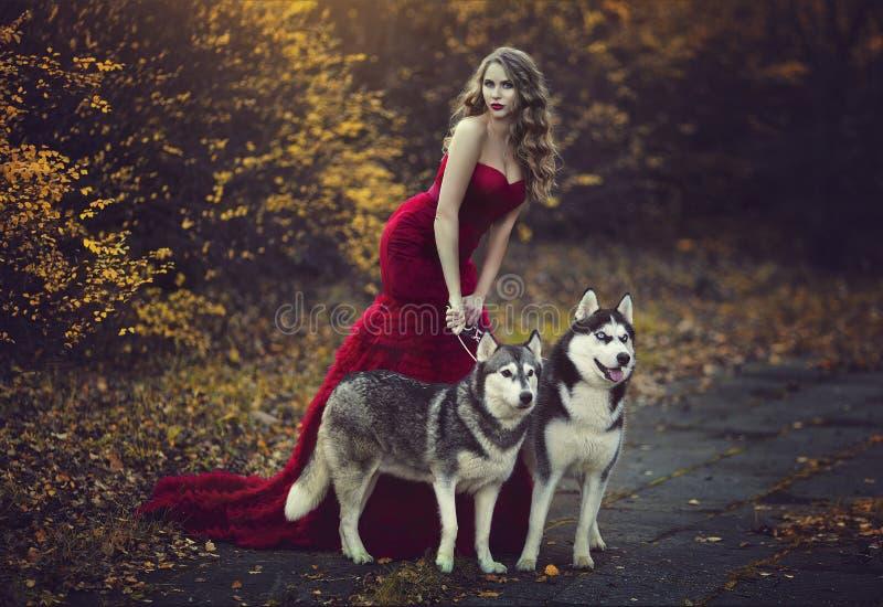 Красивая белокурая девушка в шикарном красном платье, идя с 2 осиплыми собаками в лесе осени стоковая фотография rf