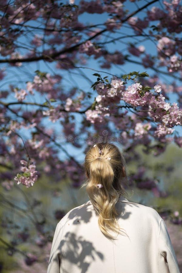 Красивая белокурая молодая женщина в парке вишневого цвета Сакуры весной наслаждаясь природой и свободным временем во время ее пу стоковые изображения rf