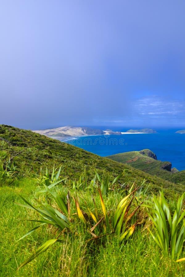 Красивая береговая линия Новой Зеландии стоковое изображение rf