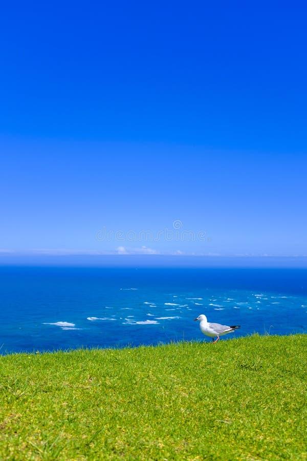 Красивая береговая линия Новой Зеландии стоковое фото
