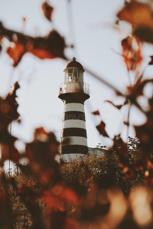 Красивая вертикальная далекая съемка striped маяка с листьями вокруг в нерезкости стоковые изображения rf