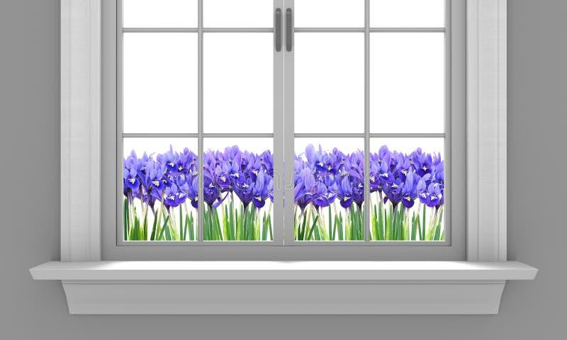 Красивая весна irises цвести вне окна дома иллюстрация штока