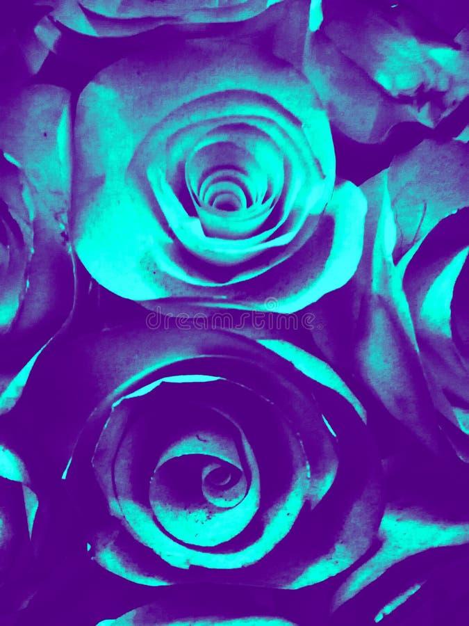 Красивая голубая зеленая белые и черные розовые предпосылка и текстура иллюстрации цветка в саде стоковое фото rf