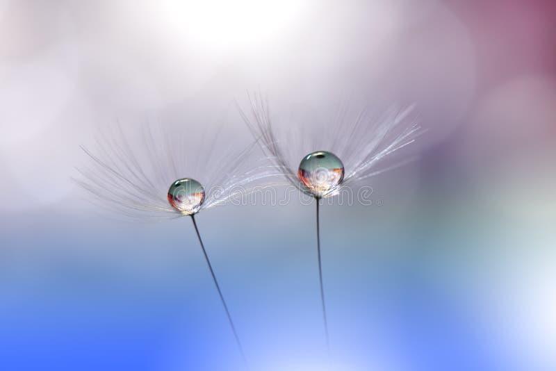 Красивая голубая предпосылка природы r r Творческое изумительное флористическое фото Одуванчик, падение стоковое фото
