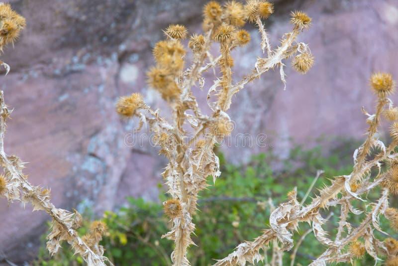 Красивая гористая предпосылка на осенней флоре с всеми своими красотой и col стоковая фотография