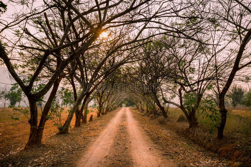 Красивая грязная улица с тоннелем деревьев и исчезая пункта на заходе солнца стоковое фото rf