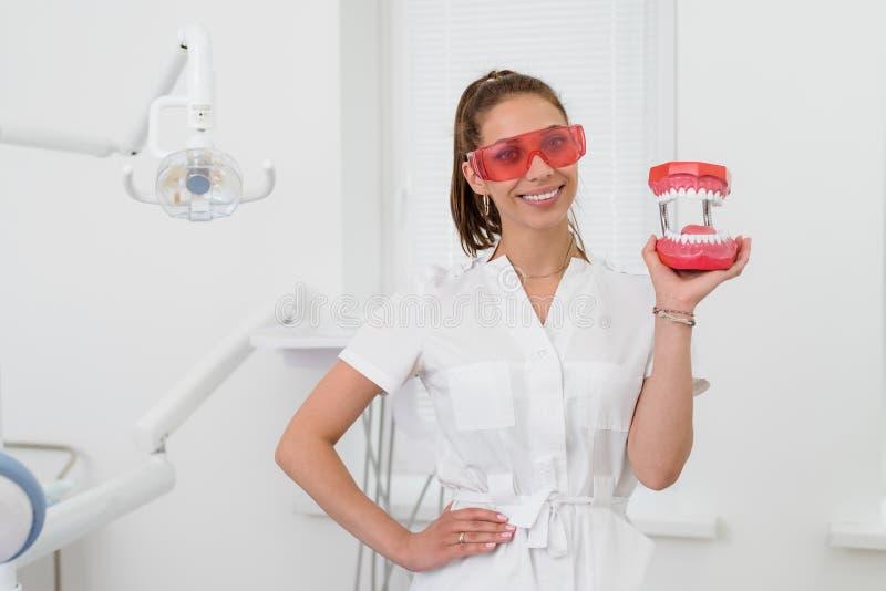 Красивая девушка дантиста демонстрирует в руке модель человеческой челюсти стоковое фото